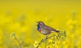 Společná evropská politika a nastavení zemědělských dotací nejsou pro ptáky a přírodu příznivé, ilustrační foto