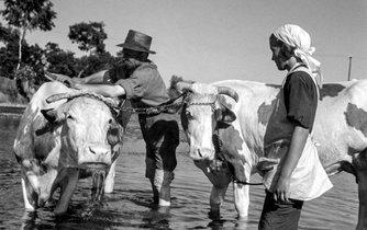 Bukolická idylka. Československo chránilo své zemědělce vysokými cly uvalenými na dovoz obilí, masa, mouky a živého dobytka.