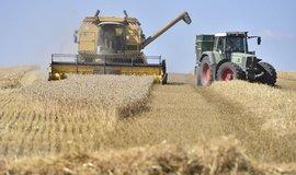 Sklizeň pšenice, ilustrační foto