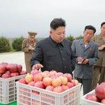 Zkoumá jakost severokorejského ovoce.