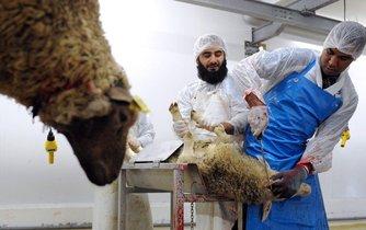 Porážka ovcí, ilustrační foto