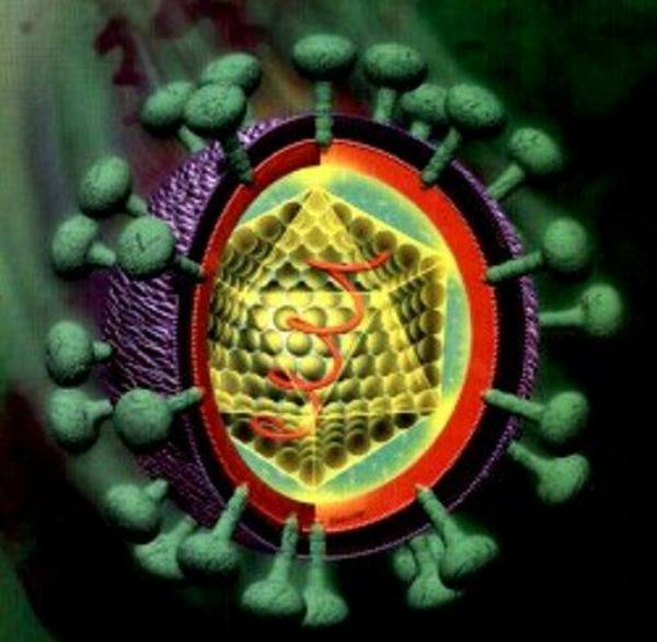 hepatitis C, hepatitida, virus,