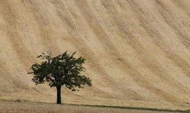 Pšenici z českých polí vytlačí výnosnější plodiny, říká expert na klimatické změny