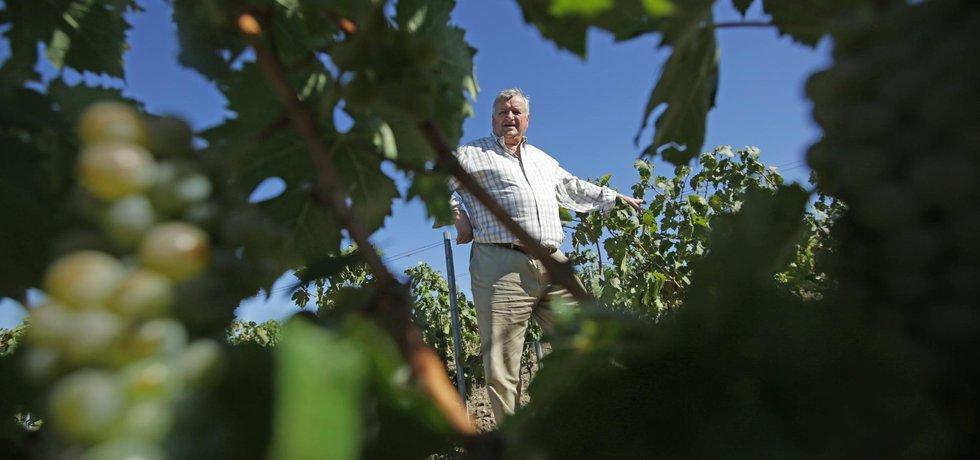 Miloš Michlovský zná své vinohrady nazpaměť, pěstuje známé odrůdy, ale i ty, které sám vyšlechtil