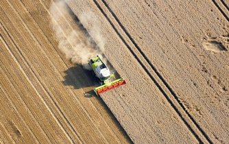 Pšenice, sklizeň