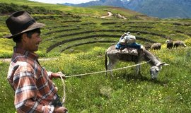 Pastevec v oblasti inckého archeologického naleziště Moray u Cusca, ilustrační foto