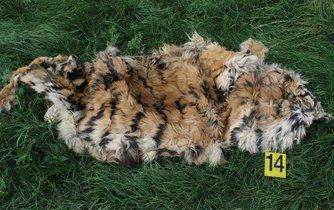 Tygří kůže