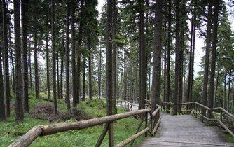 Národní přírodní rezervace Boubínský prales