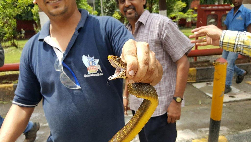 Nestočený had. Sládek Ondřej Koucký a jeho úlovek ze stáčecí linky v indické Bombaji.