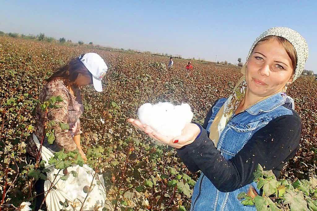 Sběračky bavlny. Uzbekistán využívá ke sklizni bavlny státní zaměstnance. Tyto dvě ženy normálně pracují jako zubařky