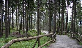 Lesy ČR můžou kácet v Boubínském pralese kvůli kůrovci, ekologové nesouhlasí