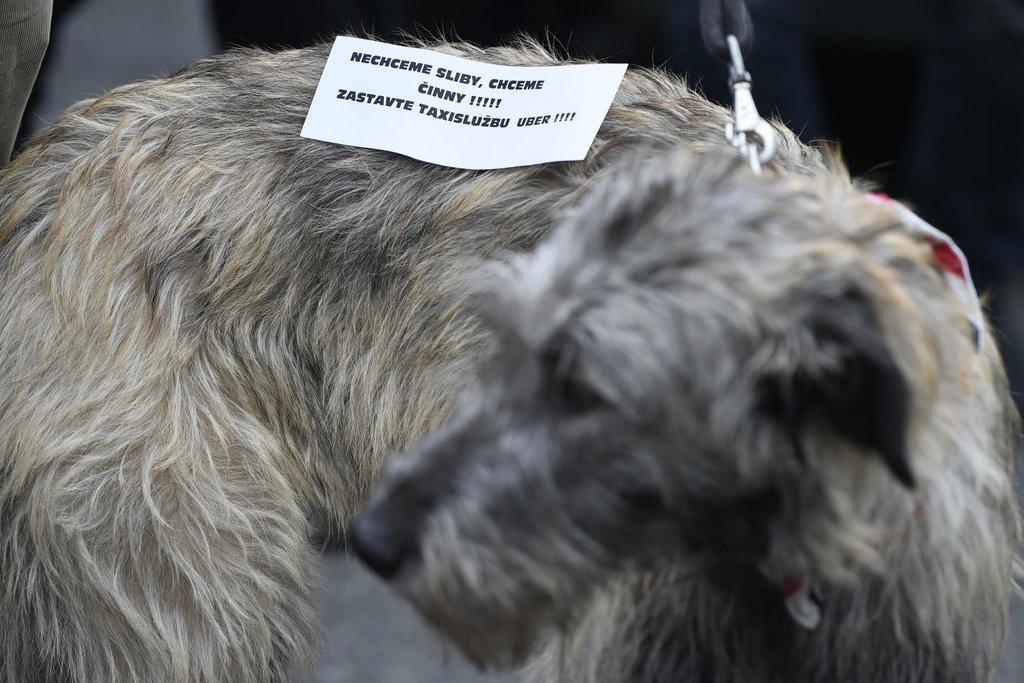 Protestují také psi