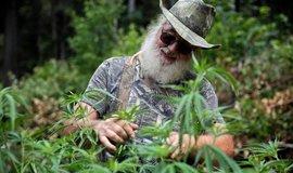 Pěstování marihuany v Kalifornii, ilustrační foto