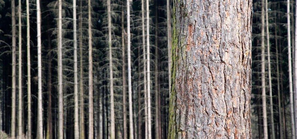 Investice do lesů v Rumunsku je prý bezpečná.