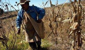 Zemědělec v Mexiku, ilustrační foto