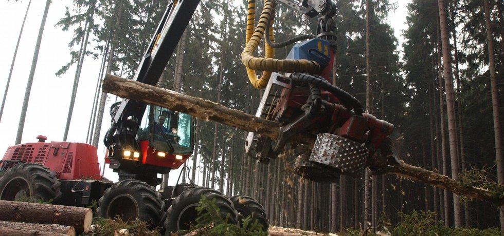 Těžba dřeva, ilustrační foto