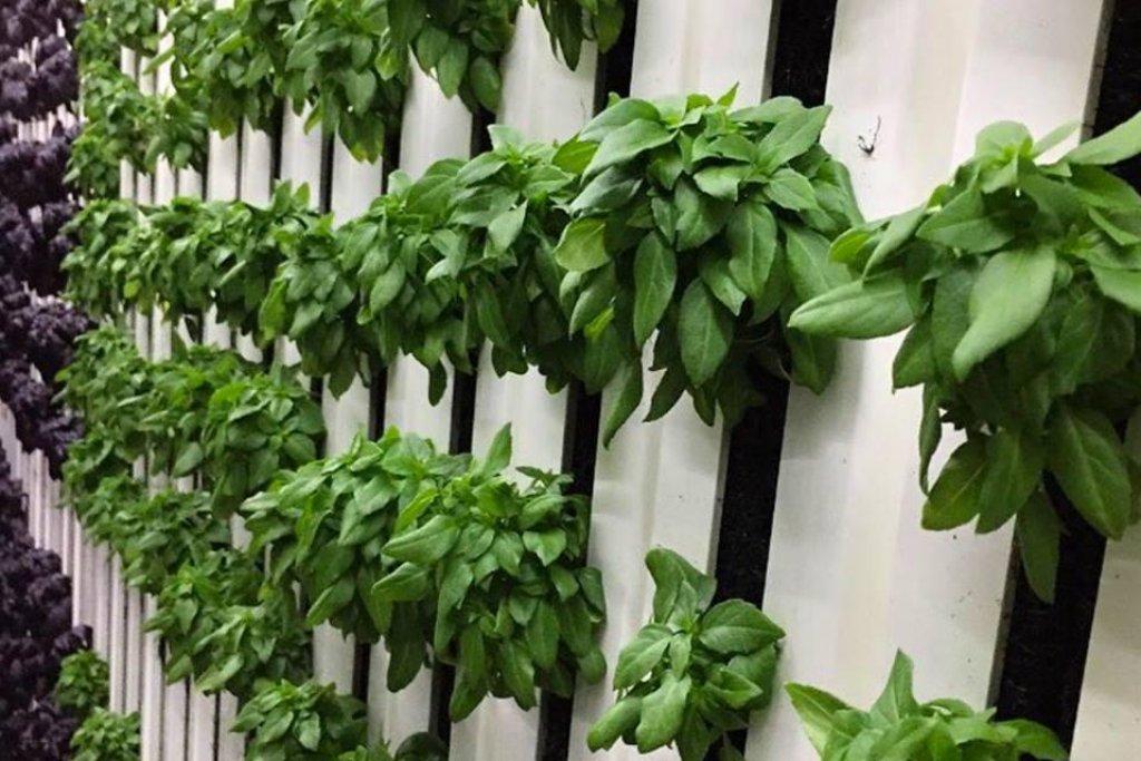 V kontejnerech je možné měnit klima podle potřeb pěstované zeleniny. Od množství kyslíku po hladinu světla a teplotu. Není prý problém vytvořit tropické nebo mírné klima.