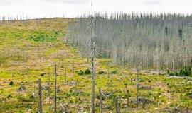 Šumavský les napadený kůrovcem, ilustrační foto