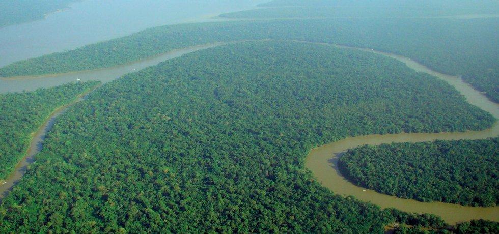 Tropický prales z ptačí perspektivy, ilustrační foto
