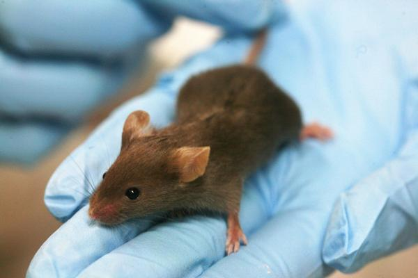 laboratoř, věda, výzkum, myš