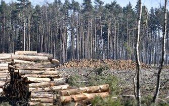 Les napadený kůrovcem, ilustrační foto