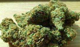 Marihuana, ilustrační foto