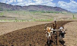 Češi učí Afričany farmařit podle aplikace, ilustrační foto