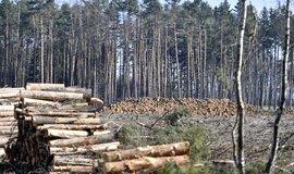 Škody za půl bilionu. Moc využitelného lesa nám nezůstane, tuší výzkumník Horáček