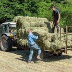 Drobní zemědělci ve Walesu, ilustrační foto