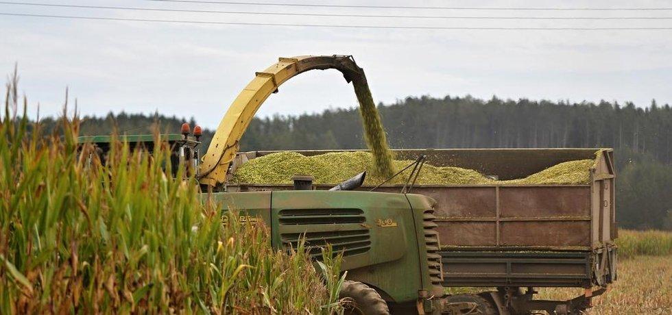 Sucho poznamenalo i letošní sklizeň kukuřice
