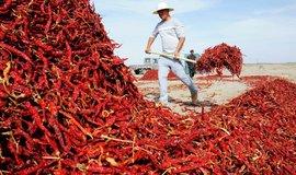 Šafrán, chilli papričky i žabí stehýnka: na čem vydělávají země miliardy dolarů