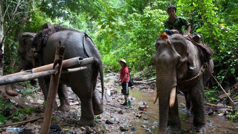 Sloni chovaní v zajetí v Barmě, ilustrační foto