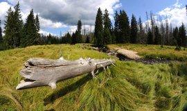 Správa Národního parku Šumava uspořádala 11. srpna akci Den pro rašeliniště. Na snímku jsou mokřiny u Šáreckého potoka (Zdroj: ČTK)