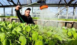 Pěstování zeleniny v Česku,