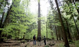Šumavský národní park - ilustrační foto