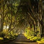 The Dark Hedges v Severním Irsku