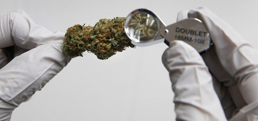 Zpracování marihuany, ilustrační foto